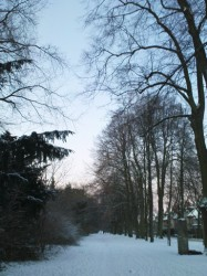 prozessionsweg, 5. januar 2009